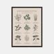 Gehalt-Krydderurter-Sand-Plakat-Sort-Ramme-30x40