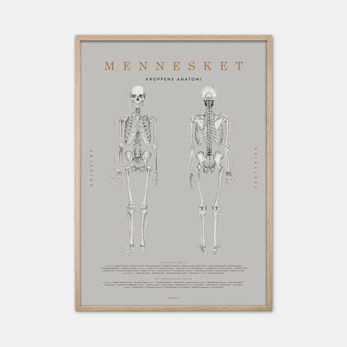 Gehalt-Anatomi-Plakat-Eg-Ramme-50x70-D