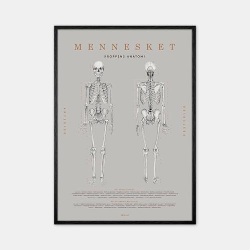 Gehalt-Anatomi-Plakat-Sort-Ramme-D