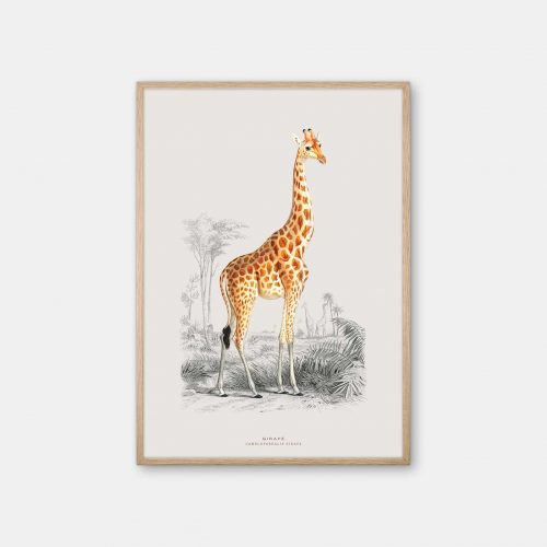 Gehalt-Botanisk-dyr-Giraf-kunstplakat-eg-ramme