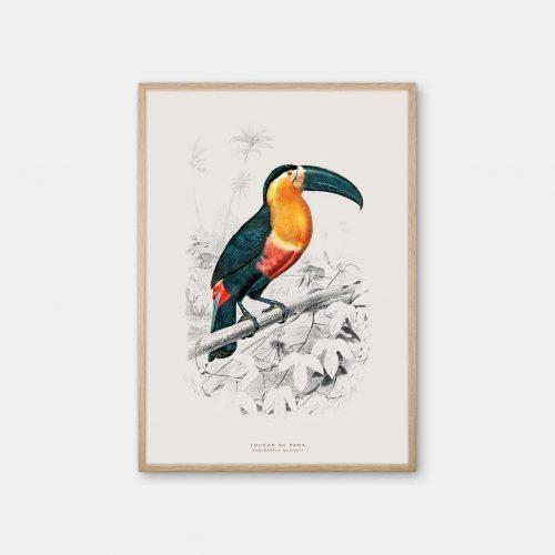 Gehalt-Botanisk-dyr-Toucan-kunstplakat-eg-ramme