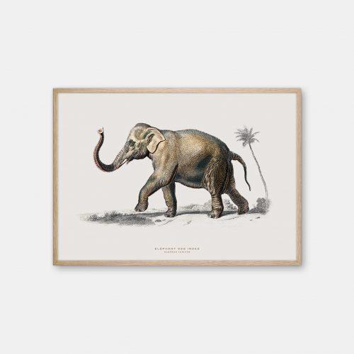Gehalt-Botanisk-dyr-elefant-kunstplakat-eg-ramme