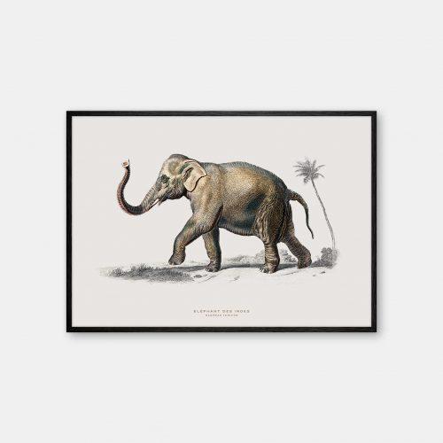 Gehalt-Botanisk-dyr-elefant-kunstplakat-sort-ramme