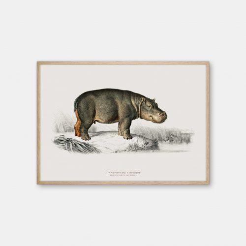Gehalt-Botanisk-dyr-flodhest-kunstplakat-eg-ramme