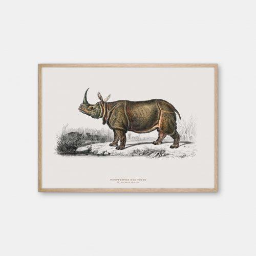 Gehalt-Botanisk-dyr-naesehorn-kunstplakat-eg-ramme