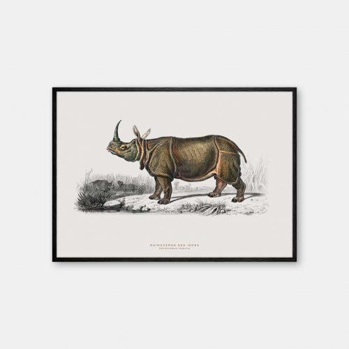 Gehalt-Botanisk-dyr-naesehorn-kunstplakat-sort-ramme