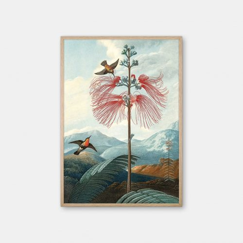 Gehalt-Botanisk-kunstplakat-Temple-of-flora-flowering-eg-ramme