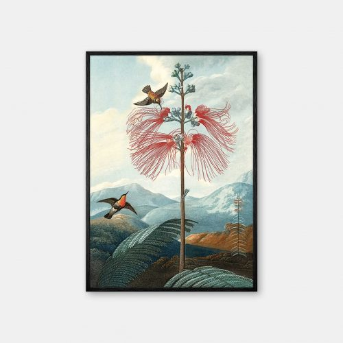 Gehalt-Botanisk-kunstplakat-Temple-of-flora-flowering-sort-ramme