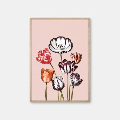 Gehalt-Botanisk-kunstplakat-Temple-of-flora-tulipaner-rosa-eg-ramme