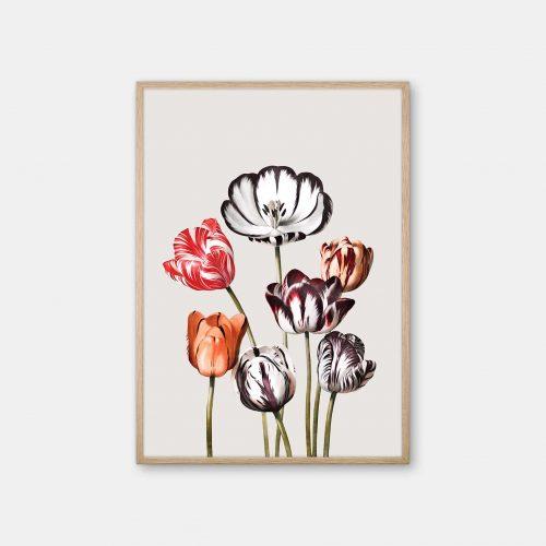 Gehalt-Botanisk-kunstplakat-Temple-of-flora-tulipaner-varm-graa-eg-ramme