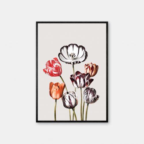 Gehalt-Botanisk-kunstplakat-Temple-of-flora-tulipaner-varm-graa-sort-ramme