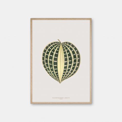 Gehalt-Botanisk-kunstplakat-varm-graa-Dichorisandra-50x70-plante-eg-ramme
