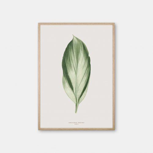Gehalt-Botanisk-kunstplakat-varm-graa-Dracana-plante-eg-ramme