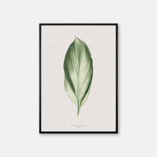Gehalt-Botanisk-kunstplakat-varm-graa-Dracana-plante-sort-ramme