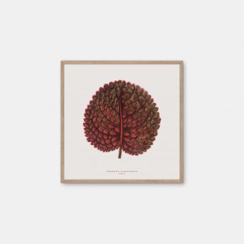 Gehalt-Botanisk-kunstplakat-varm-graa-Gesnera-50x50-plante-eg-ramme