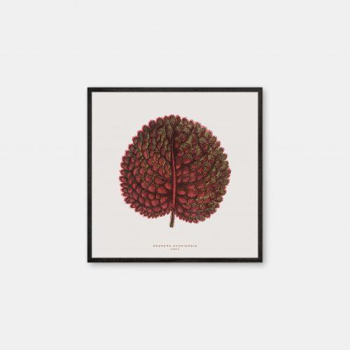 Gehalt-Botanisk-kunstplakat-varm-graa-Gesnera-50x50-plante-sort-ramme