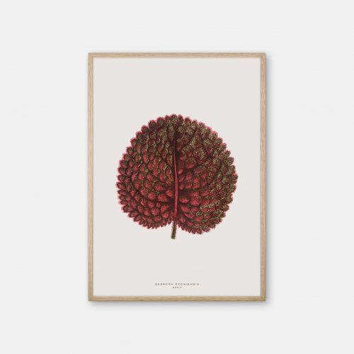 Gehalt-Botanisk-kunstplakat-varm-graa-Gesnera-plante-eg-ramme