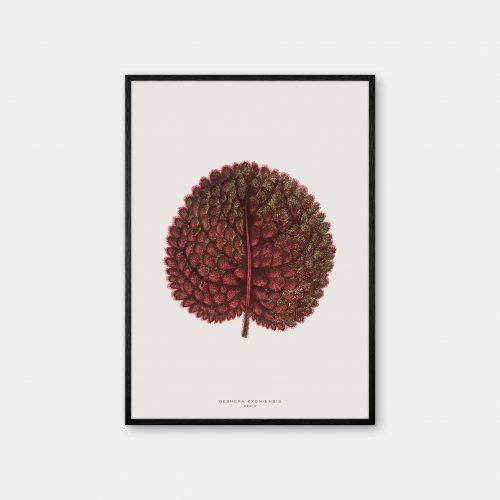Gehalt-Botanisk-kunstplakat-varm-graa-Gesnera-plante-sort-ramme