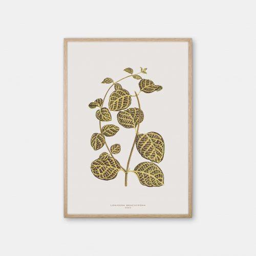 Gehalt-Botanisk-kunstplakat-varm-graa-Lonicera-plante-Eg-ramme