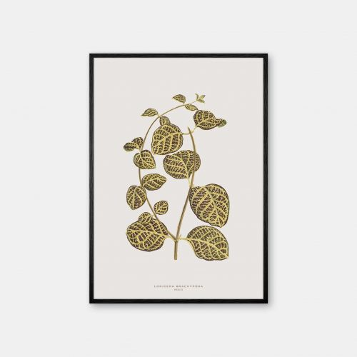 Gehalt-Botanisk-kunstplakat-varm-graa-Lonicera-plante-sort-ramme