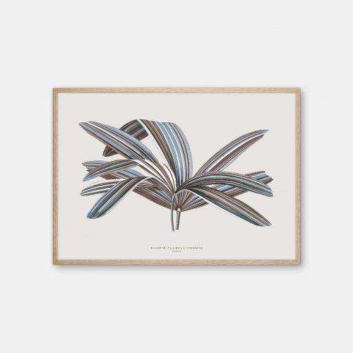 Gehalt-Botanisk-kunstplakat-varm-graa-Rhapis-plante-eg-ramme