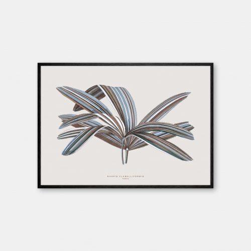 Gehalt-Botanisk-kunstplakat-varm-graa-Rhapis-plante-sort-ramme