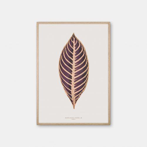 Gehalt-Botanisk-kunstplakat-varm-graa-Sanchezia-plante-eg-ramme
