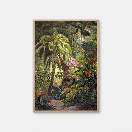 Gehalt-Botanisk-palmarum-kunstplakat-Acrocomia-Chamaedorea-eg-ramme