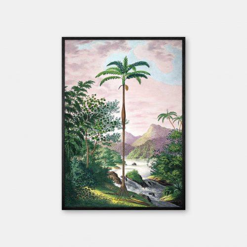 Gehalt-Botanisk-palmarum-kunstplakat-Iriartea-ventricosa-Sort-ramme