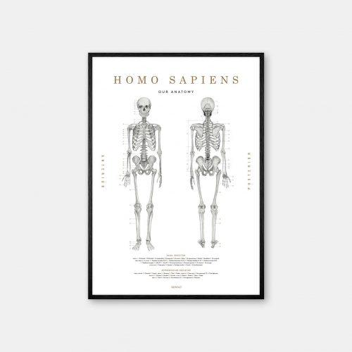 Gehalt-Homo-Sapiens-White-Poster-Black-Painted-Frame